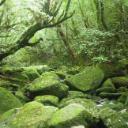 YukiOZAWA