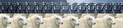 clones2.png